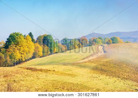 Early Autumn Countryside Scenery In Foggy Weather. Row Of Trees In Colorful Foliage On The Hill Alon