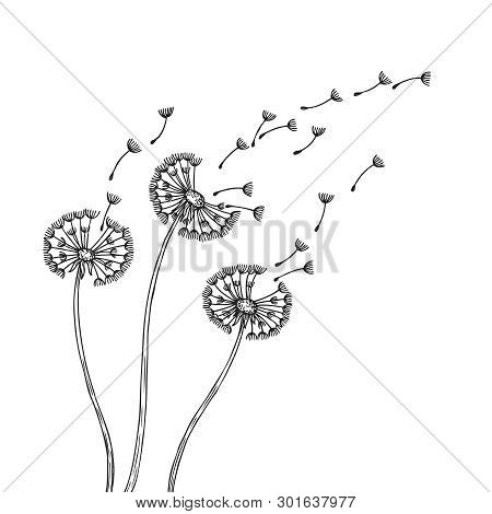 Dandelion Silhouettes. Dandelions Grass Pollen Delicate Plant Seeds Blowing Wind Fluff Flower Abstra