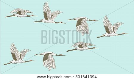 Flock Of Flying Red-crowned Cranes In Sketch Or Hand-drawn Style