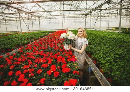 Beautiful Young Smiling Girl, Worker With Flowers In Greenhouse. Concept Work In The Greenhouse, Flo