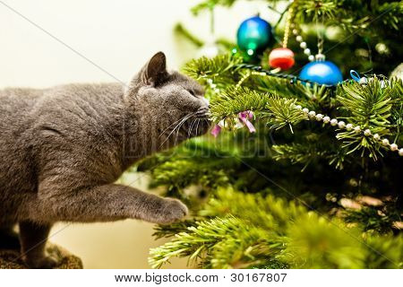 Cat Investigating A Christmas Tree