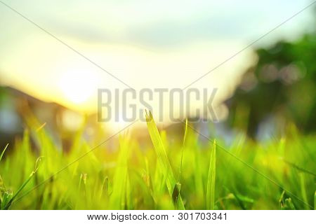 The Morning Sun Shines On The Green Lawn In Front Of The House, Natural Background, Blur Background.