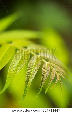 Close-up Of Plant, Selected Focus. Empty Space For Text.