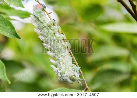 Big Worm In The Green Garden. Macro.