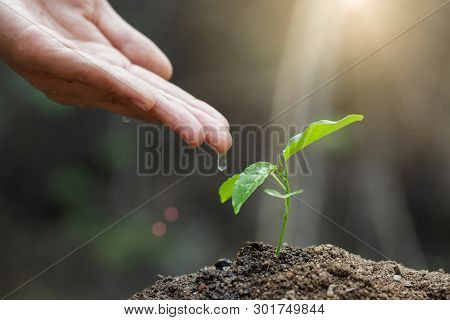 The World Environment Day, Male Hand Giving Water To Tree With With  Drop Over Green And Morning Sun