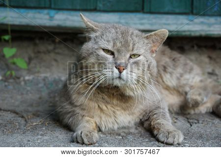 Gray Cat Lies And Looks At The Pavement Against The Green Wall