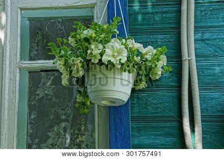 One White Plastic Flowerpot With Flowers Hanging On The Wooden Wall Of The House By The Window