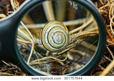 A Black Loupe Magnifies A Gray Snail In Dry Grass