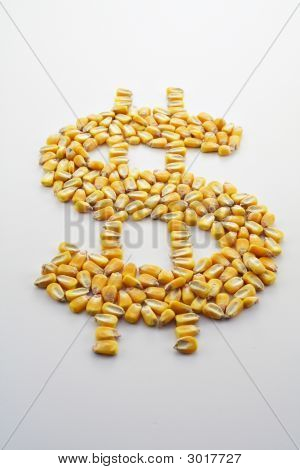 Cash Corn Crop Ii