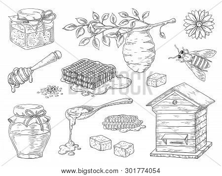 Hand Drawn Honey. Vintage Bee Honeycomb And Honey Jar Sketch Elements, Doodle Flowers And Beeswax. V