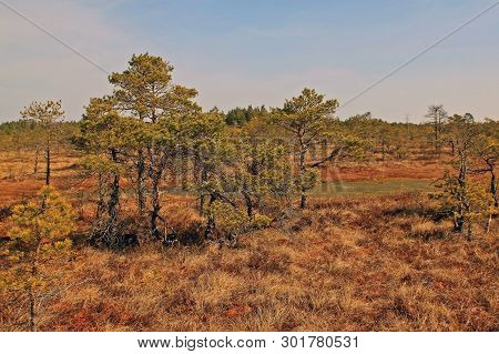 Great Ķemeri Bog In Ķemeri National Park Has Short And Long Boardwalk Trails Are Present, With An Ob