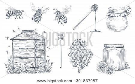 Honey Bees Engraving. Hand Drawn Beekeeping, Vintage Honey Farm And Honeyed Bee Pollen Vector Illust