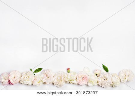 White Roses On A White Background. Off White Creamy Spray Roses Framing A Blurred  White Background