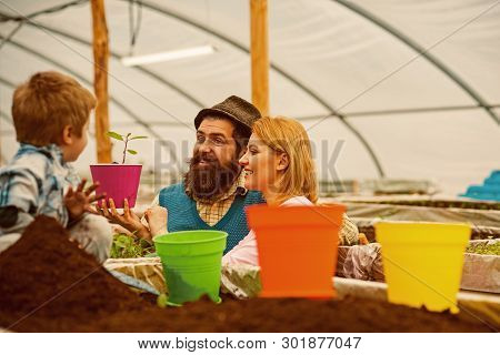 Flowerbed. Happy Family Work On Flowerbed. Greenhouse Flowerbed Concept. Flowerbed With Young Plants