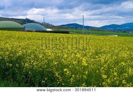 Biogas Production In The Middle Of Oilseed Rape, Production Of Biodiesel - Ecological Fuel Of New Ag