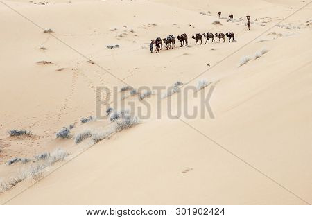 Caravan Going Through The Sand Dunes In The Sahara Desert