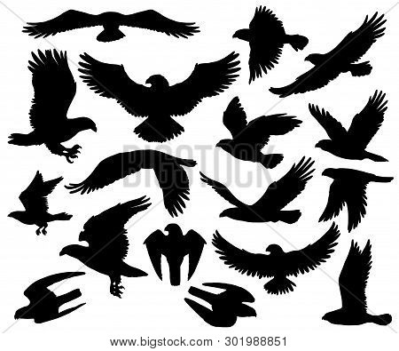 Eagles, Falcons And Predatory Birds Heraldry Silhouettes. Vector Isolated Heraldic Coat Of Arms Symb