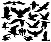 Eagles, falcons and predatory birds heraldry silhouettes. Vector isolated heraldic coat of arms symbols of vultures and hawks, flying birds of prey and bald eagle, falconry or falcon hunt poster