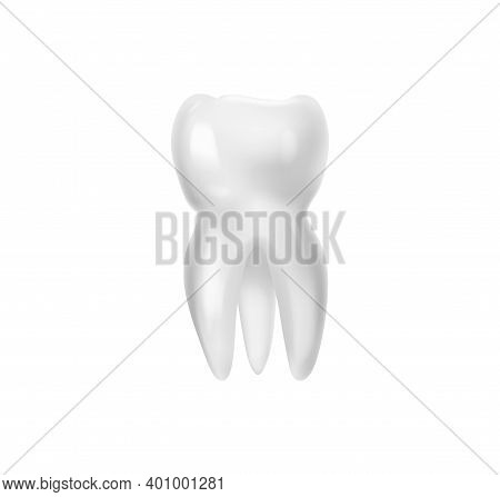 Realistic Tooth Anatomy Composition With Isolated Image Of Huge Wisdom Tooth With Root Vector Illust