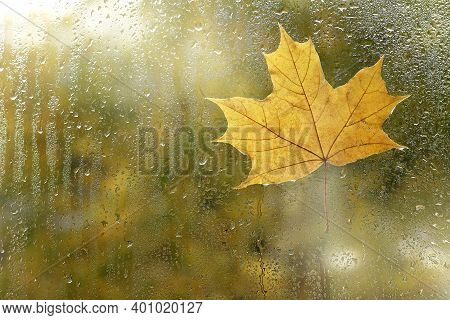 Yellow Maple Leaf Stuck To The Back Of The Window After Rain. This Is How Real Autumn Begins