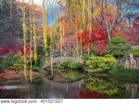 Stunning Fall Colors In The Fort Worth Botanic Garden Featuring Bright Red Japanese Maple Trees