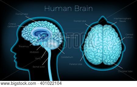 Human Brain Poster Illustrated Silhouette Of Head Profile With Text Description Of Glowing Brain Are