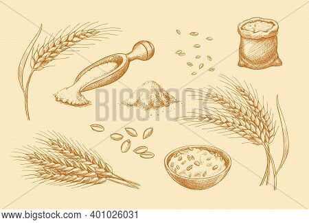 Cereals Set. Hand Drawn Wheat, Rye, Oats, Barley Cereals. Ear Spikes And Seed Vintage Style. Food Sk