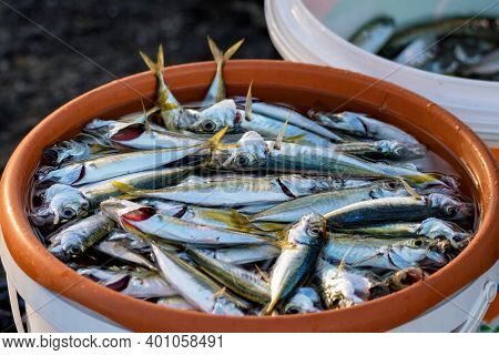 Freshly Caught Fish In A Bucket Of Water At The Istanbul Market