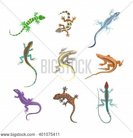 Set Of Colorful Forest Lizards Or Salamanders Flat Vector Illustration Isolated.