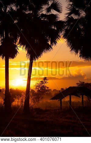 Blur Old Hut Near Sugar Palm Tree In The Morning With Sunrise Sky. Golden Sunrise Sky And Silhouette
