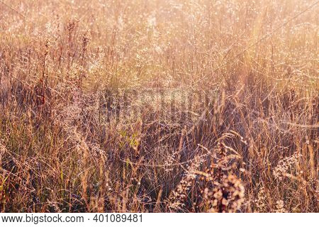 grass meadow in summer sun rays