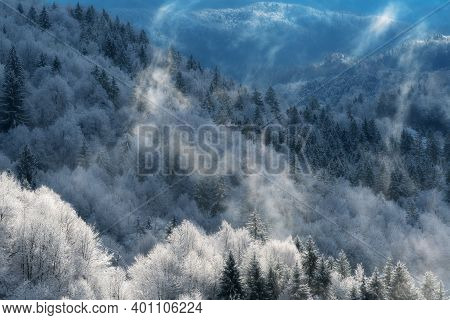 Aerial View Of Beautiful Mixed Forest With Rising Fog In Winter. Nature, Forestry And Environment Co