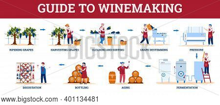 Infographic Guide To Winemaking With Winemakers Characters, Flat Cartoon Vector Illustration Isolate