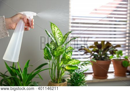 Female Hand Spraying Water On Indoor House Plant On Window Sill With Water Spray Bottle, Take Care O