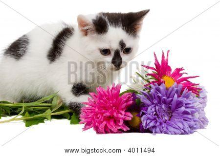 Small Kitten Sitting Near Flowers