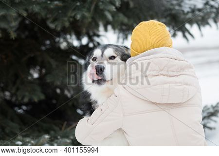 Woman Embracing Alaskan Malamute In Winter Forest. Close Up. Dog.