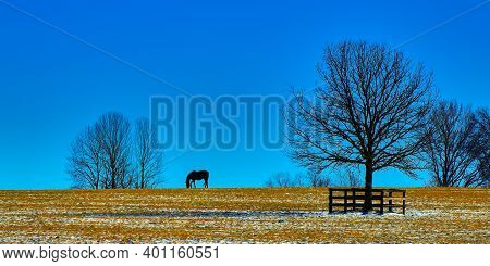 Silhouette Of A Thoroughbred Horse Gazing Agianst A Blue Sky In A Snowy Field.