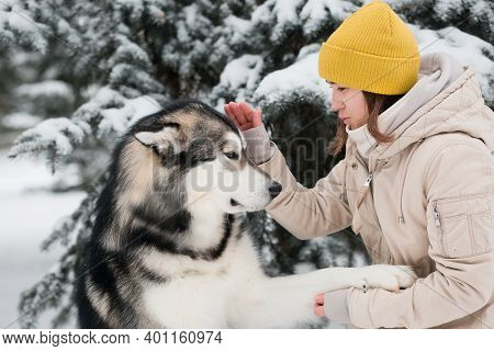 Woman Training Alaskan Malamute In Winter Forest. Close Up. Dog Give Paw.