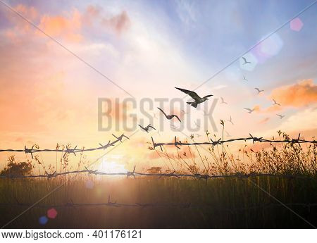International Migrants Day Concept: Silhouette Of Bird Flying And Barbed Wire Over Autumn Sunset Bac