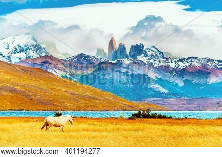The famous Torres del Paine park in southern Chile. Lagoon Azul is an amazing mountain lake at the foot of three magnificent rocks - torres. South American wild horses - mustangs graze on the grass