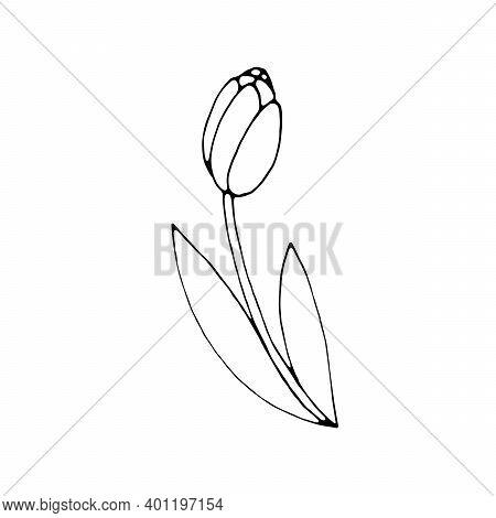 Simple Flower Outline Images Illustrations Vectors Free Bigstock