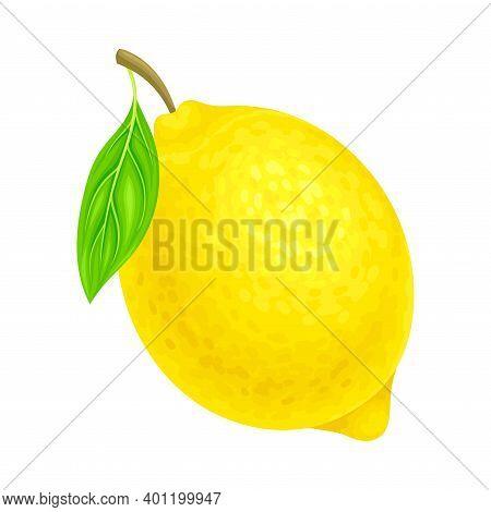 Lemon Ellipsoidal Yellow Fruit With Sour Taste Vector Illustration