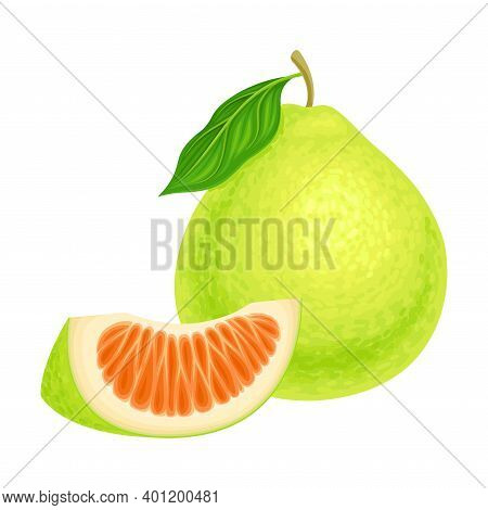 Whole Pomelo Or Pummelo As Largest Citrus Fruit With Thick Rind Vector Illustration