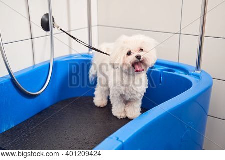 Dog Waiting For A Bubble Bath In Grooming Salon