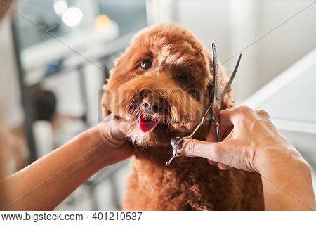 Funny Dog Sitting At The Grooming Salon