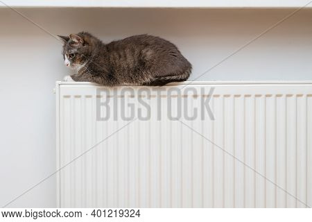 Domestic Cat Sleeping On Radiator. Cute House Pet Resting On Warm Heating Device. Heating Season