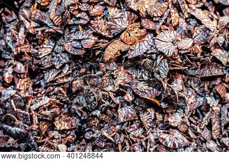 Close Up Shot Of Cut Betel Nut Or Areca Nut On A Black Surface.