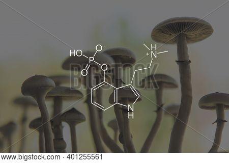 Psilocybin Formula. Legalization Medical . Psychoactive Natural Drug. Recreational Use Of Psilocybin
