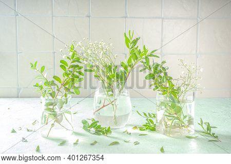 Spring Green Plants In Glasses