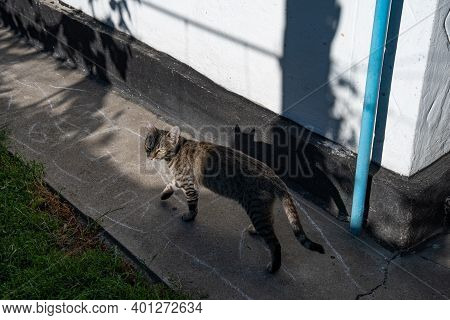 Authentic Farmhouse Backyard And Young Grey Tabby Cat Walking By Old Cement Path In Bright Sunlight